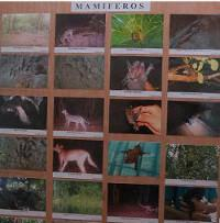 Photos of mammals