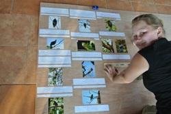 Costa Rica bird display