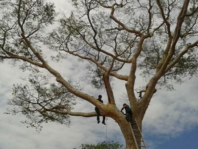 Macaw nest