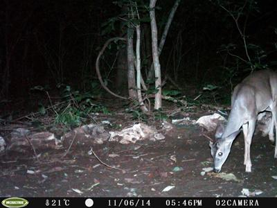 A photo taken by one of the camera traps in Costa Rica