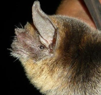In Costa Rica, a Projects Abroad destination, a bat was found