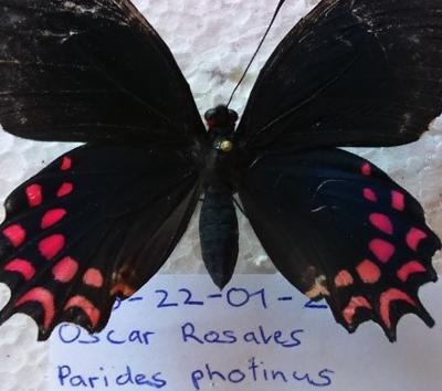 A new record of butterfly species at the Conservation site in Costa Rica