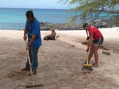 Volunteers on the Projects Abroad Conservation in Ecuador Project doing a local beach cleanup with sea lions in the background