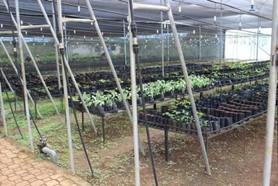 Endemic plants which will be replanted on the Projects Abroad Conservation Project in Ecuador
