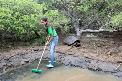 Projects Abroad Volunteers cleaning a Giant Tortoise enclosure on the Conservation Project in Ecuador