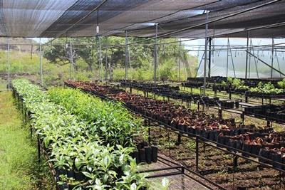 The nursery in the Highlands in Galapagos Islands, Ecuador