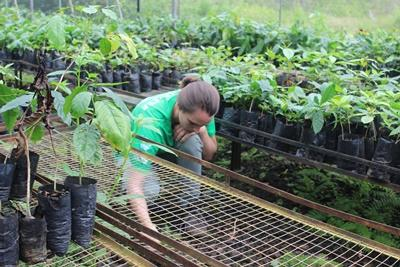 Ecuador Conservation volunteer in nursery