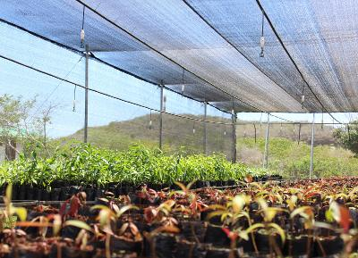 As part of reforestation efforts in Galapagos Projects Abroad volunteers assist in this nursery that houses endemic plants species