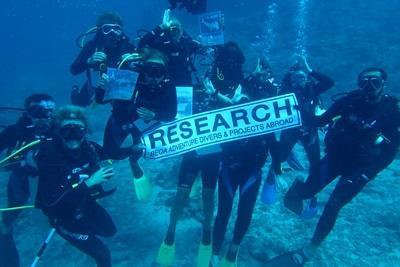 Survey Dive - Research Team
