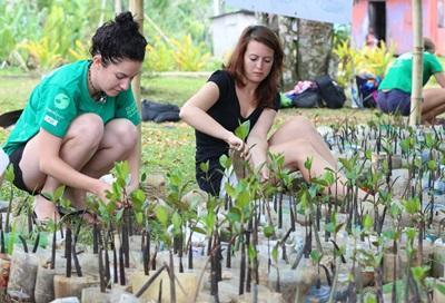 Working at the mangrove nursery