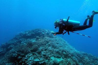 Survey Diving