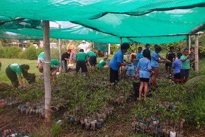 School mangroves