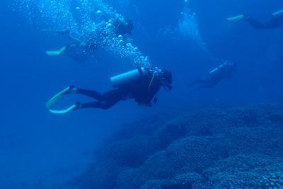 Volunteer Survey Dive