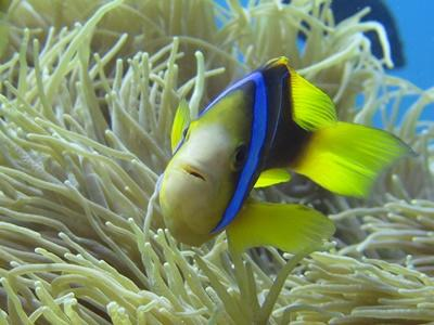 Fish in Fiji