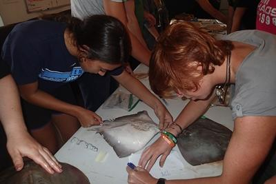 Measuring Stingrays