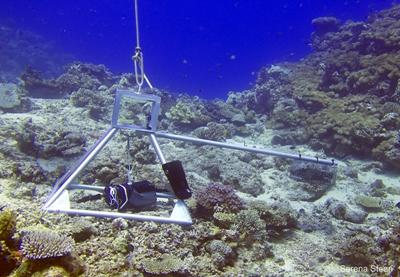 The Baited Remote Underwater Video (BRUV) used at the Projects Abroad Conservation project in Fiji
