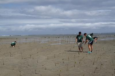 Marine conservation volunteers plant mangroves as part of Projects Abroad Fiji for Mangroves project