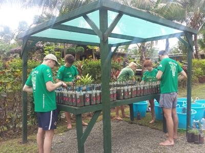 Replenishing the mongrove nursery