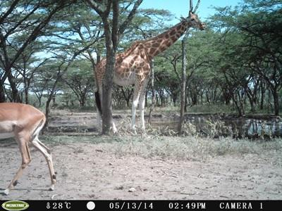 Animals found on the conservation project in Kenya with Projects Abroad