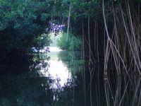 The Mangrooves at the lagoon