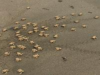 Released turtles
