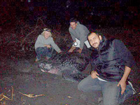 A leatherback turtle found by our volunteers