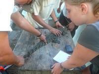 Measuring smaller crocodile