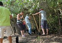 Working at the mangroves