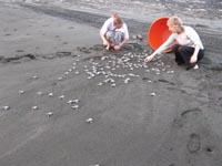 Releasing the hatchlings