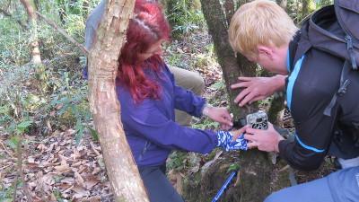 volunteers installing camera traps