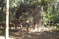 Razor-Billed Curassow Enclosure