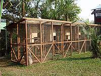 Juvenile-Quarantine Cages