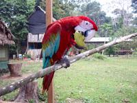 Newly Installed Red and Green Macaw