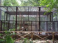 New jaguar enclosure