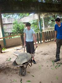 Moving a tortoise to its new enclosure