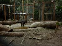 New Wild Dog Enclosure