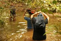 Mammal census wading through swamps