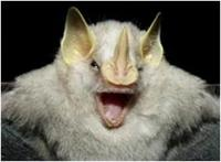 Little yellow eared bat