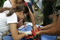 Taking blood from macaw for health checks before release