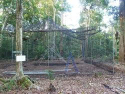 New Howler Monkey Cage