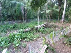 Tapir Enclosure Extension
