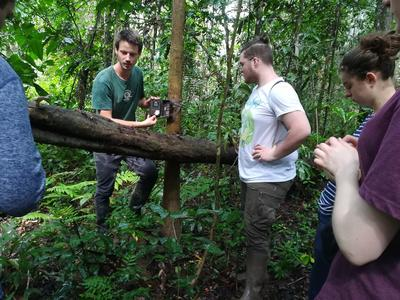 Checking upturned tree roots for bat roosts