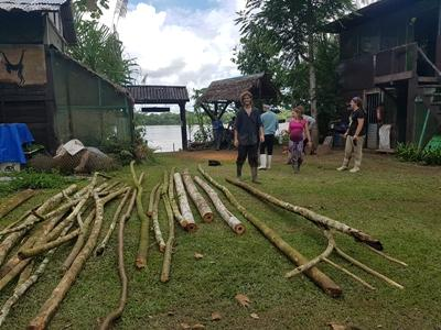 Volunteers brining poles for newly remodelled curassow cage