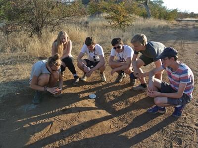Analysing animal tracks