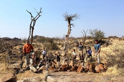 Baobab protection