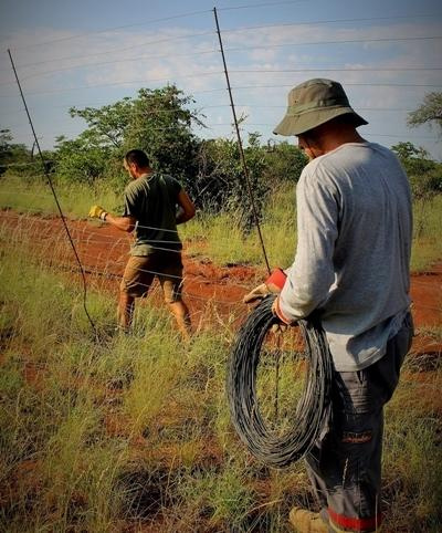 Projects Abroad Conservation remove a fence that is threatening wildlife in Wild at Tuli nature reserve, Botswana.