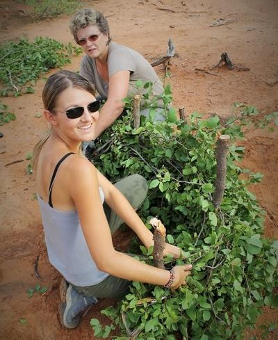 Projects Abroad conservation volunteers take part in erosion control methods in Wild at Tuli Nature Reserve in Botswana