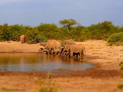 Projects Abroad volunteers work to identify elephants at their conservation project in Wild at Tuli reserve, Botswana.