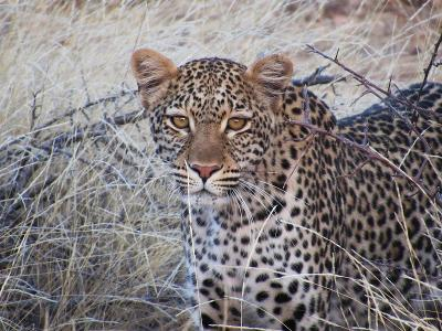 Leopard spotted at a water source in the reserve
