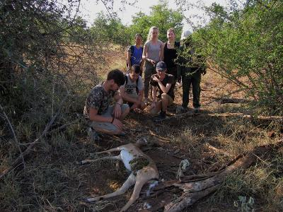 Volunteers encounter a victim of a poacher's snare